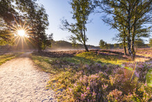 Sun Rising Over Empty Dirt Road In Fischbeker Heide Reserve