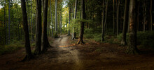 Panorama Of Incredible Sunset Int He Forest During Autumn. Warm Late Sumemr Sunset In Woodland. Sunshine Through The Trees