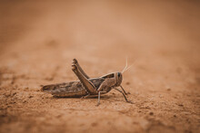 Grasshopper On The Ground With Earth