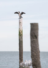 A Seagull Sitting On A Wooden Pole Enjoying The Sun At The Beach