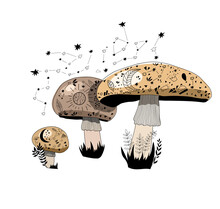 Forest Mushrooms. Mystic Mushrooms. Floral. Moon And Stars.
