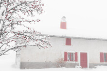 Snow Covered Rowan Tree And Old Stone Farm House With Red Wooden Shutters And Red Door At Background. France. Retro Aged Red Black White Photo. Winter Christmas Countryside Holidays.  Selective Focus.