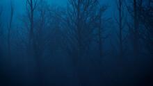 Spooky Halloween Woodland Scene At Night.