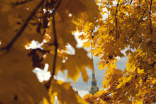 Yellowed Maple Foliage. Peter And Paul Fortress On A Sunny Autumn Day, Saint-Petersburg, Russia.