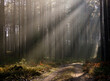 Misty rays of sun lit in the middle of the forest.