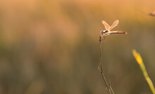 Dragonfly On Grass