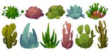 Set Of Cactus, Desert Cacti Flowers Opuntia, Monilaria, Cotyledon, Echeveria Colorata, Echeveria Agave,saguaro Cartoon Succulents With Green Prickly Or Fleshy Leaves, Cactaceae Vector Illustration