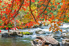 View Of A Stormy Mountain River Through Red Autumn Leaves In September. New Hampshire, USA