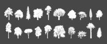 Trees Silhouettes, Hand Drawn Images In Vector.