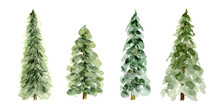Pine Trees Collection Of 4, Evergreen Winter Tree For Holiday Greeting Graphic Design, Hand Painted Watercolor Isolated On White Background