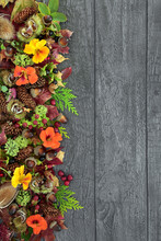Abstract Background Border For The Autumn Harvest Festival With Leaves, Nuts, Flowers And Berry Fruit. Natural  Composition For Fall, Thanksgiving,  Samhain On Rustic Wood. Top View, Copy Space.