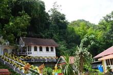 Rain Forest Or Tropical Rain Forest (English: Tropical Rain Forest)