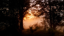 Sunset Or Sunrise Framed By Wild Trees In The Country