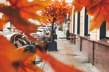Fall Season In Town. View On Urban Road, Parked Cars And Pedestrian Street Through Bright Orange Foliage Of Tree. Moscow, Russia.