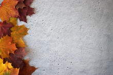 Multicolored Maple Leaves On A Cement Background. Autumn Concept.