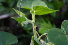 Planta En La Naturaleza Con Escarabajo Amarillo Y Negro