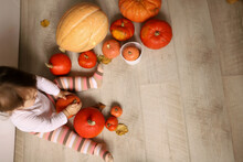 Little Cheerful Girl Indoor Holds Pumpkins. In Striped Tights. Harvest Concept, Halloween. Wood Background With Place For Your Text. High Quality Photo. High Quality Photo