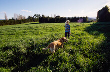 Girl And Labrador Dog Walking In Green Field