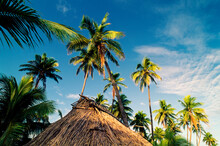 Traditional Fijian Hut With Thatched Roof Among Palm Trees And Blue Sky Above