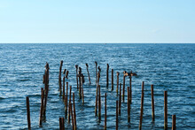 A Flock Of Cormorants In The Sea On Wooden Poles From The Destroyed Pier. Fishing Boats In The Distance. Copy Space. Selective Focus.