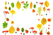 Frame Of Colorful Bright Yellow Leaves, Red Rowan Berries And Rose Hips Isolated On A White Background. Autumn Concept. Top View, Copy Space, Flat Lay.