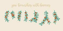 Yew Tree Branches With Berries. Christmas Symbol Great For Christmas Wreaths And Arrangements. Vector Drawing Isolated.