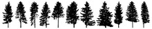 Silhouette Of Tall Forest Trees, Set Of Beautiful Spruce Trees. Vector Illustration.