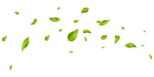 Vegan, Eco, Organic Design Element. Green Leaves Flying On White Banner. Wave Foliage Ornament. Leaf Falling. Beauty Product. Fresh Tea Background. Cosmetic Pattern Border. Vector Illustration