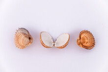 Set Of Clam Mollusk Shells Isolated On White Background, Cube Shell And Brown Stripes, Shells Of Many Types And Sizes Are Found, Top View. Set Of Brown, Yellow And Grey Clam Mollusc Shells.
