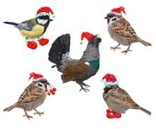 Digital Christmas Set With Christmas Wild Bird. White Background.