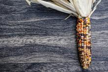 Single Ear Of Decorative, Colorful Corn On A Dark Background.