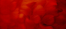 A Bright Red Feather. Abstract Blurred Background Made Of Bird Plumage. Cabaret, Holiday. Banner. Close-up, Soft Focus