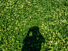 Silhouette Of A Boy Taking A Picture In Front Of Green Vines