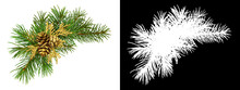 Christmas Corner Arrangement With Pine Twigs And Golden Cones Isolated On White Background And  Silhouett
