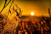 Spinnweben Mit Tautropfen Im Sonnenaufgang