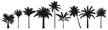 Palm Trees Silhouette. Retro Coconut Trees, Hand Drawn Tropical Palm Silhouettes Vector Set