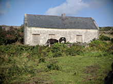 Horse Grazing In Front Of An Old Barn On A Sunny Day
