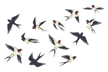 Flying Birds Flock. Cartoon Hand Drawn Swallows In Fight With Different Poses, Kids Illustration Isolated On White. Vector Set