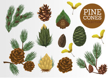 Collection Of Pine Cones