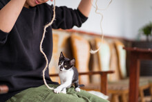 Anonymous Owner Playing With Kitten At Home