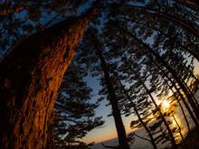 松林の隙間から覗く日の出