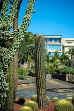 Cactus Garden With Column And Barrel Cactus