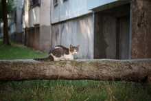 The Cat Is Sitting On A Concrete-insulated Pipe.