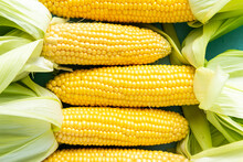 Corncobs Or Corn Ears In Husk On Blue Background. Top Down View