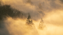 The Sun Shines Through The High Fog And The Trees Cast Beautiful Shadow Patterns