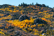 Fall Colors With Autumns Trees On Rocky Mountains Hillside In Wyoming