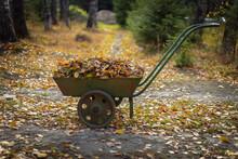 Fallen Leaves In A Wheelbarrow