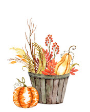 Pumpkin Patch And Fall Leaves Watercolor Illustration. Autumn Fall Thanksgiving Harvest Pumpkin Bucket Corn Hay Hand Painted Arrangement