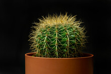 Echinocactus Grusonii, Commonly Called Mother-in-law's Seat, Golden Ball, Golden Barrel Or Hedgehog Cactus, Is A Species Belonging To The Cactaceae Family In A Clay-colored Pot And Black Background