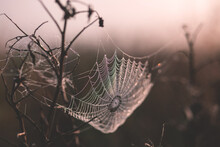A Wet Spider Web On A Plant In A Meadow In Suchawa.. Original Public Domain Image From Wikimedia Commons